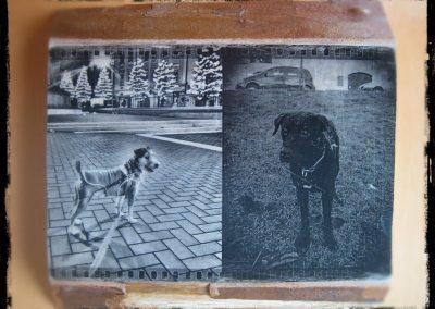 A kutya az ember legjobb barátja, fotótranszfer, platánfa, A4-es méret